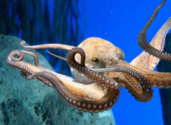 podvodni svet u barseloni