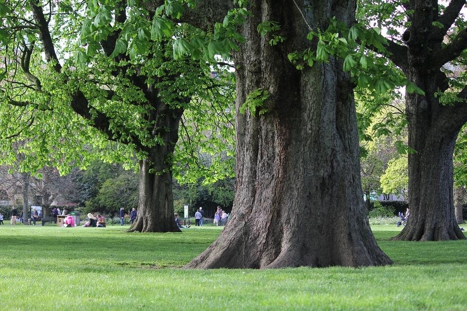 parkovi u engleskoj